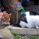 クロネコヤマトのダンボールで猫を飼いませんか?(・・)ノ