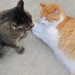 ネコの寿命っていくつだろう、ギネス猫と比較してみた