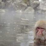 冷たい温泉は美肌と疲労回復に良いが、冷やしすぎは禁物