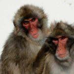 指紋を採取して、犯人は人間ではなく猿の可能性もある