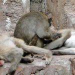 動物園へ「日曜日」に行くのは止めた方が良い理由と、オススメの曜日と時間帯について