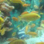 自宅で海を作りたいなら「擬似海水」を使おう、水族館も使っている?