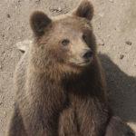 泥棒を追い詰めた「熊」と兵士になった「熊」、嘘のようで本当のお話