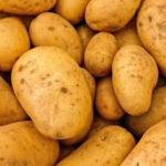 なぜ小学校でジャガイモによる「ソラニン中毒」が発生するのか、考えられる原因と対策方法とは何か
